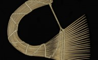 Afro Comb Museum Exhibit
