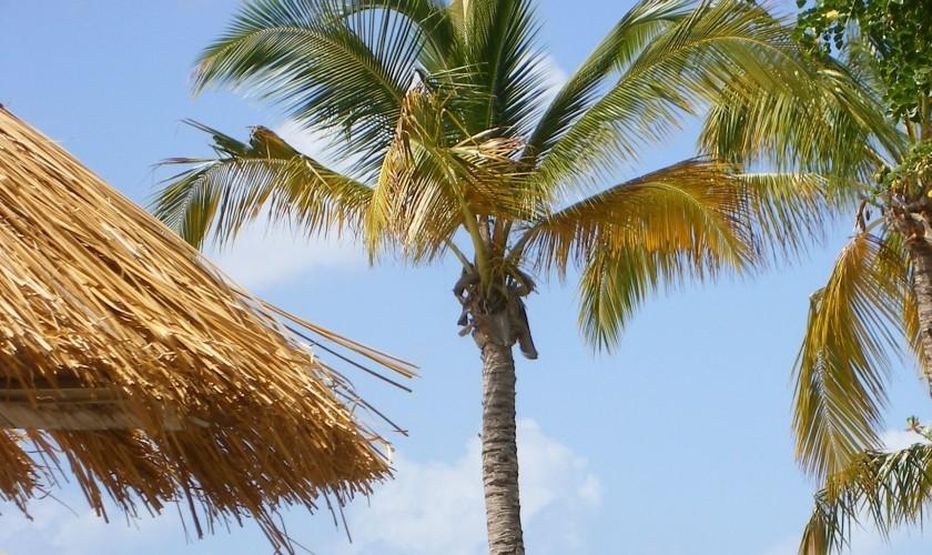 caribbean-beach-5