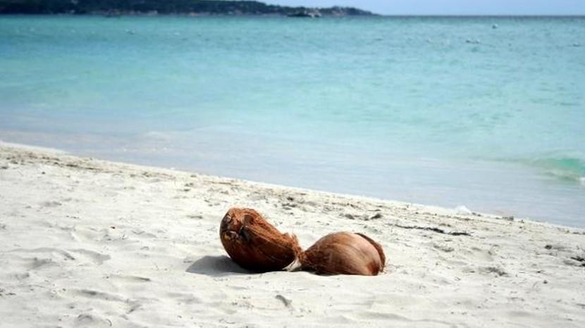 coconut-beach