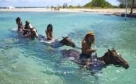 Jamaica Braco Stables